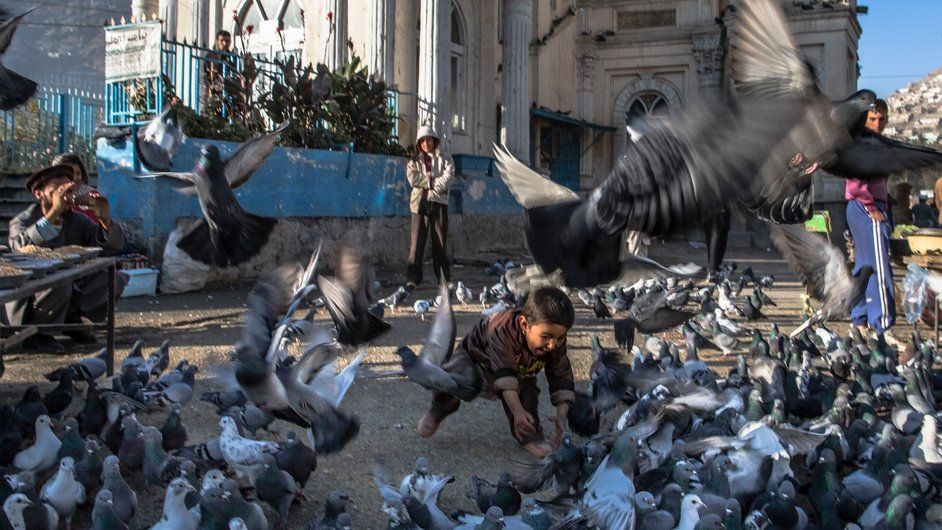 A young Afghan boy chases pigeons in front of the Shah-e Doh Shamshira shrine in Kabul
