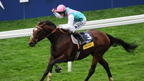 David Jennings of The Racing Post discusses the £125,000 stud fee for the legendary Frankel