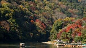 Maple trees change colour on the Katsura river in Arashiyama in Kyoto, Japan