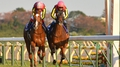 Gentildonna bests Arc runners for Japan Cup win