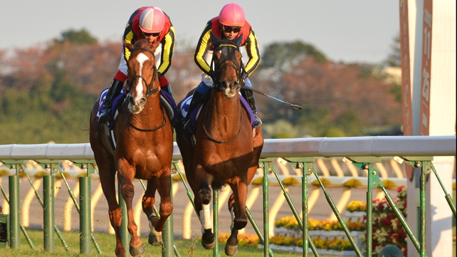 Japanese superstar Orfevre looked a somewhat unlucky loser for a second consecutive race, as triple crown heroine Gentildonna (hooded) barged the colt in search of racing room on the home straight