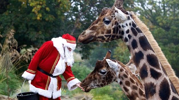 Santa at Dublin Zoo