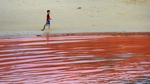 A boy walks along the shore at Clovelly Beach in Sydney, Australia, as a red algae bloom inhabits the water