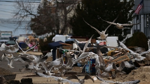 Seagulls pick at rubbish piled up in front of homes damaged by Superstorm Sandy in Ortley Beach, New Jersey
