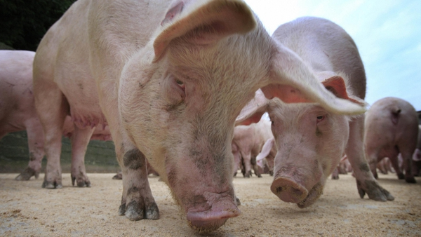 Pig farmers have been urged to improve their bio-security measures