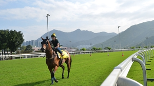 Sea Siren from Australia during trackwork session at Sha Tin racecourse  in Hong Kong