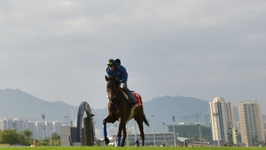 Cirrus Des Aigles, seen here during track work at Sha Tin, has been scratched from the feature race at Hong Kong's lucrative International meeting