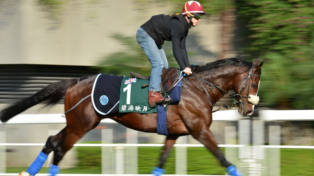 Sea Moon pictured at Sha Tin doing some track work prior to his intended engagement