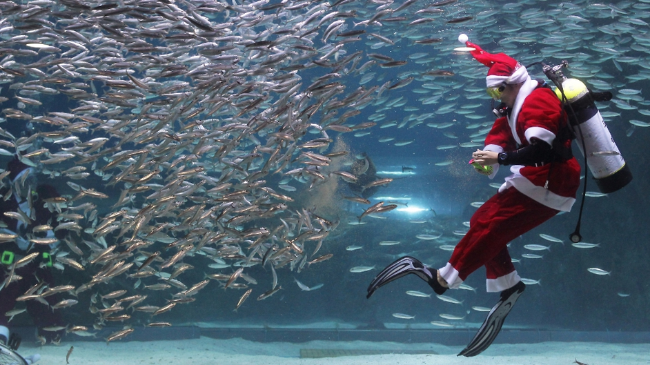 A South Korean diver dressed as Santa swims with sardines at The Coex Aquarium in Seoul