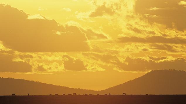 A dream trip to Serengeti National Park?
