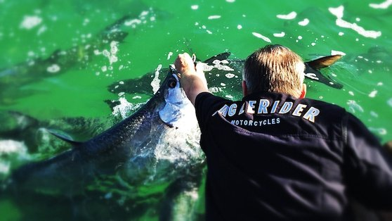 Tarpon feeding time!