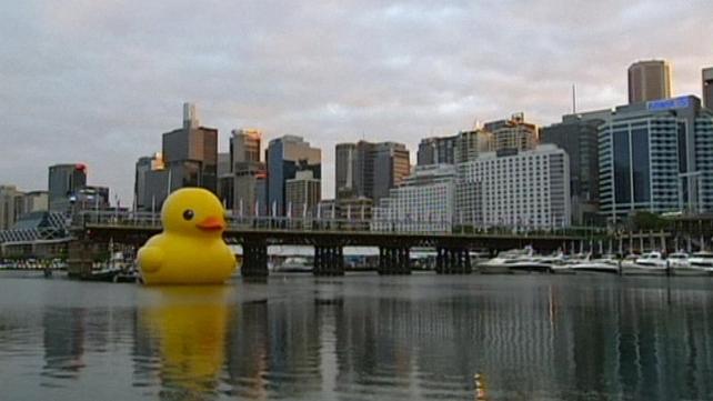 The 15m duck was designed by Dutch artist Florentijn Hofman