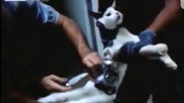 The cats body was wrapped in tape and also carried drills, an earphone, a memory card, batteries and a phone charger (Pic: YouTube)