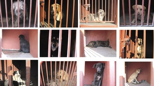 Many people re-posted the images of the dogs staring sadly from behind bars at an animal shelter (Pic: Mexico City's Attorney Generals Office)