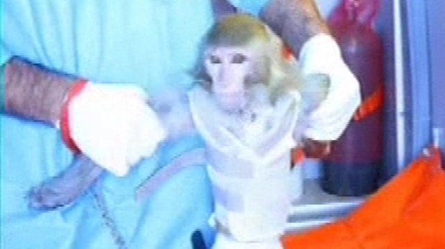 The defence ministry said the space launch of the monkey was last week