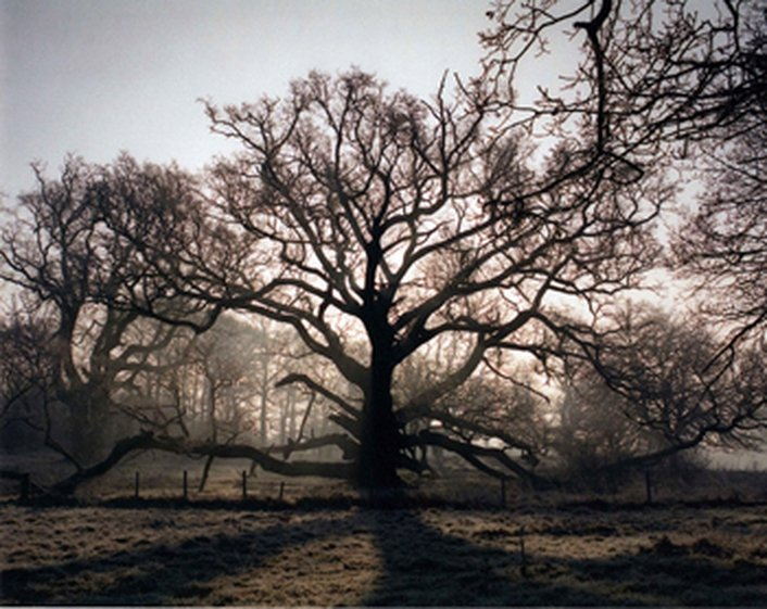 Vote For Tree Of The Year!