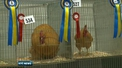 26th National Show of the Irish Society of Poultry Fanciers