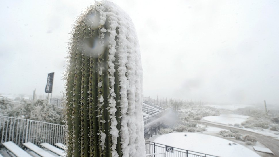 A cactus is covered in snow at the Ritz-Carlton course in Arizona as play was suspended due to weather during the first round of the World Golf Championships