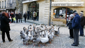 Farmers walk with geese in the streets of the city of Sarlat-la-Caneda in France during the Fest'Oie festival