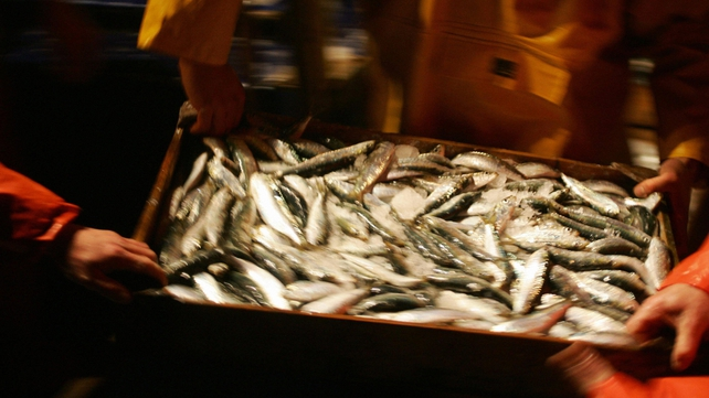 The European Commission says 23% of all fish caught by EU vessels are thrown back into the sea