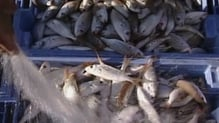 The grants will trigger new investments by 51 seafood companies