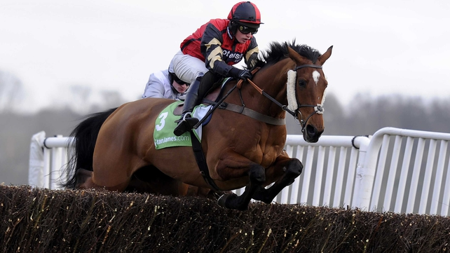 Pacha du Polder will swerve the Cheltenham Festival in favour of a trip to either Ayr or Aintree