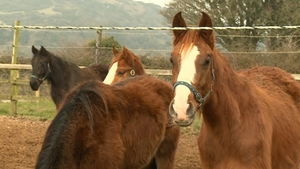 Equine database will supplement current checks at slaughterhouses