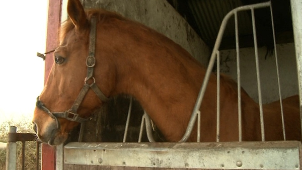 The Department of Agriculture is satisfied that only horses with valid identification are accepted for slaughter