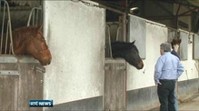 Questions raised over usefulness of proposed horse passport database