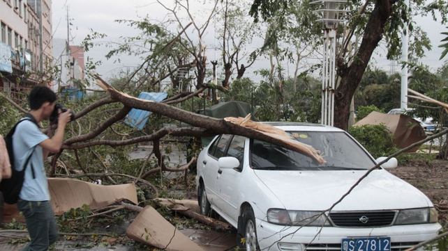 A fallen tree lies on top of a parked car