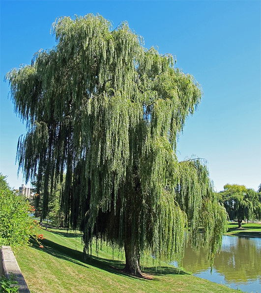 Willow Tree Wastewater System