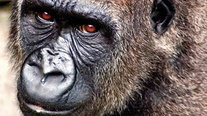 Be in with a chance to see Kafi and friends with all the family in Dublin Zoo