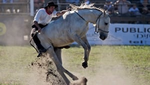 A gaucho rides a bucking colt during the traditional rodeo week in Montevideo, Uruguay