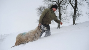 Farmer Stuart Buckle tends to sheep on his farm during heavy snow in Cumbria, England