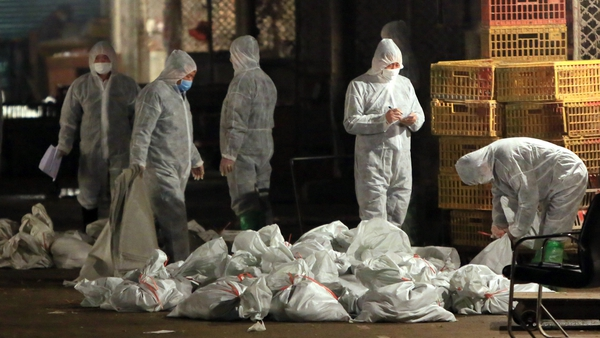 Health workers in Shanghai remove bags of dead poultry