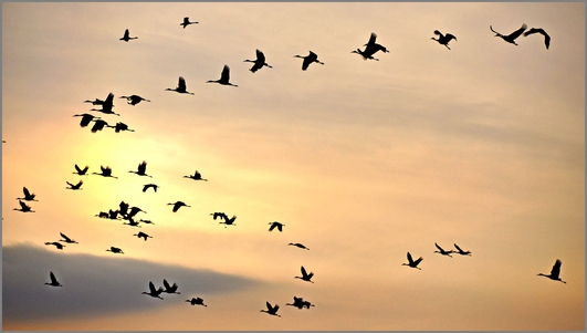 Swifts, swallows and martins