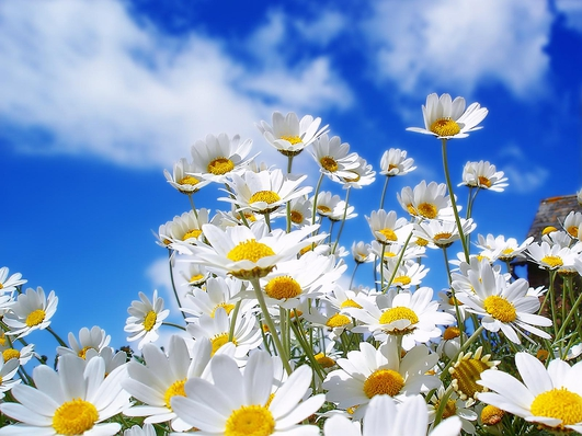 Spring Alive