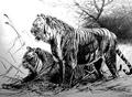 De-extincion Programme