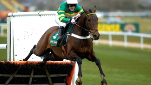 My Tent or Yours is one of the market leaders for the Stan James Champion Hurdle at Cheltenham in March