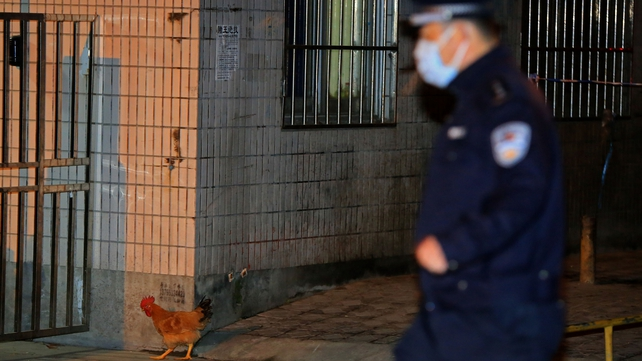 A policeman chases an escaped chicken at the Huhuai live poultry market