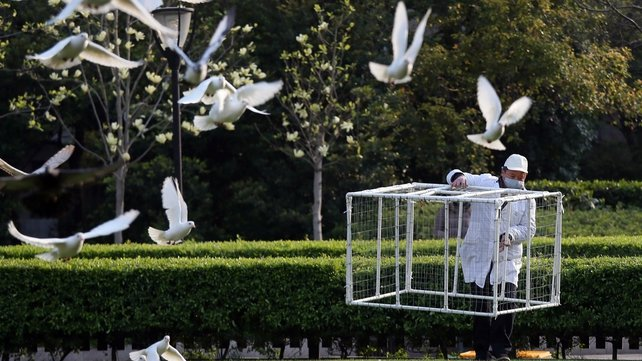 A health official sets a pigeon trap in a park in Shanghai