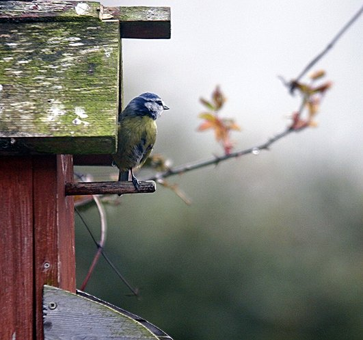 The Disabled Bluetit