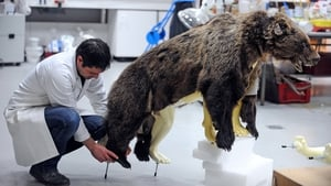 A bear called Cannelle is prepared for an exhibition in the taxidermy lab at the Museum of Natural History in Toulouse, France