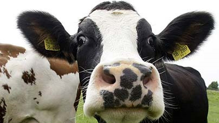 The Importance of Beef & Sheep Farming to the Irish Economy
