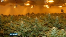Cannabis worth €2.5m seized in Galway