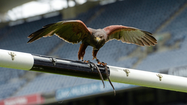 Hawk-Eye technology is set to be introduced at Croke Park this summer