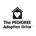 Pedigree Adoption Drive