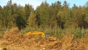 Coillte said it is 'working to regain trust' of landowners who entered into farm-forest partnerships