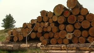 Coillte reports higher revenues and profits for last year
