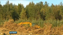 Planned Coillte harvesting rights sale unlikely to proceed